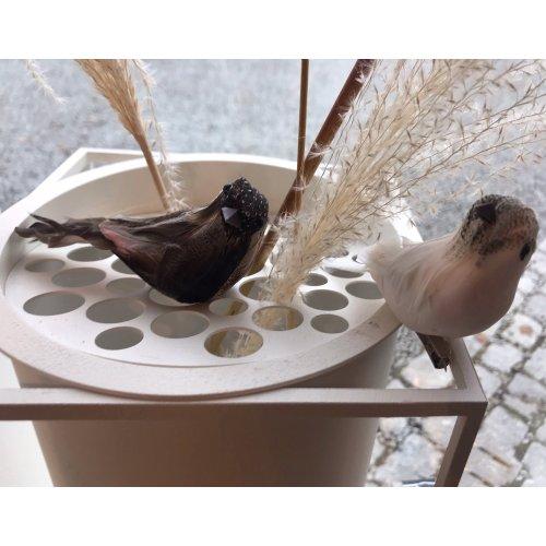 Fugle på clips